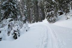 瑞士冬天-道路穿过雪 库存图片
