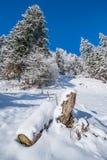 瑞士冬天 免版税图库摄影