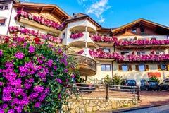 瑞士山中的牧人小屋紫色开花五颜六色的夏天南蒂罗尔适应 库存图片