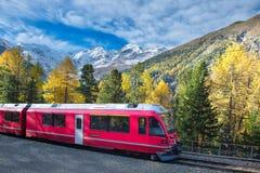 瑞士山火车Bernina明确攀越的阿尔卑斯在秋天 库存图片