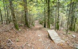 瑞士森林 免版税库存图片