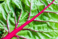 瑞士牛皮菜叶子 图库摄影