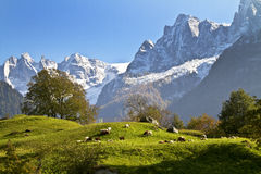 瑞士的山 免版税图库摄影