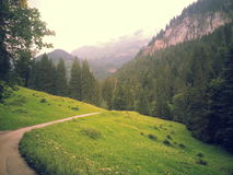瑞士自然2013 2014年 免版税图库摄影