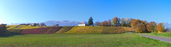 瑞士葡萄园风景 库存照片