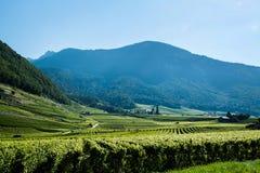 瑞士葡萄园 库存照片