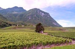 瑞士葡萄园 免版税库存图片