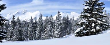 瑞士阿尔卑斯全景1b 免版税库存图片