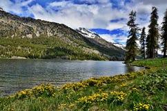 瑞士阿尔卑斯湖Silvaplana 免版税库存照片