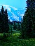 瑞尼尔山和8月野花草甸 免版税库存图片