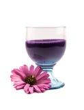 玻璃与紫罗兰充分上色了鸡尾酒和一朵桃红色花在白色背景 免版税库存图片