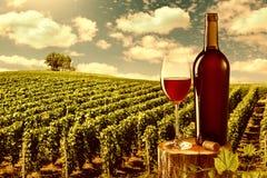 玻璃和瓶反对葡萄园的红葡萄酒环境美化 免版税库存照片