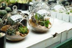 玻璃容器植物 库存照片