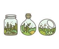 玻璃容器的植物 皇族释放例证