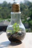 玻璃容器设计在电灯泡形状的 图库摄影