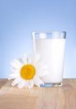 玻璃牛奶和一棵春黄菊花是木的 库存图片