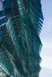 玻璃树荫 免版税图库摄影