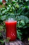 玻璃汁液蕃茄 免版税图库摄影