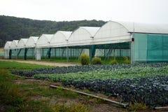 玻璃温室 免版税库存照片