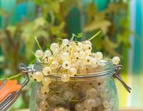 玻璃瓶子用白色无核小葡萄干 免版税图库摄影