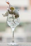 玻璃的冻植物 免版税库存图片