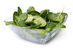 玻璃碗新鲜的菠菜 免版税库存图片