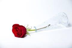 玻璃花瓶和一朵红色玫瑰 库存图片