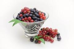 玻璃花瓶用在白色背景的黑和红浆果 免版税库存照片