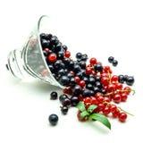 玻璃花瓶用在白色背景的黑和红浆果 库存照片