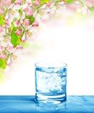 玻璃苏打水 冷的饮料和春天花 免版税库存照片