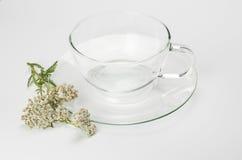 玻璃茶杯和欧蓍草开花 图库摄影