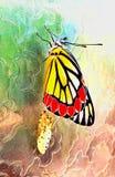玻璃表面上的蝴蝶诞生 图库摄影