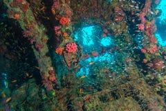 玻璃鱼学校在海难里面的 免版税库存图片
