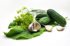 黄瓜、大蒜、莳萝和辣根在白色backgr 免版税库存照片