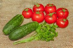 黄瓜、蕃茄和荷兰芹 库存图片