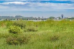 瓜亚基尔都市风景 免版税库存图片