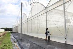 瓜农场温室蓝天背景的 库存图片