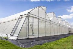 瓜农场温室蓝天背景的 库存照片