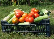 黄瓜和蕃茄 图库摄影