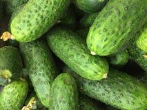 黄瓜新绿色 免版税图库摄影