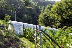 瓜温室在农场 免版税库存照片