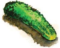 黄瓜的传染媒介例证 库存照片