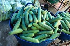 黄瓜篮子  免版税库存图片