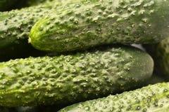 黄瓜,绿色,黄瓜背景 免版税库存图片