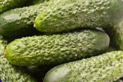 黄瓜,绿色,黄瓜背景 免版税图库摄影