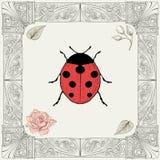 瓢虫和玫瑰色图画 库存照片