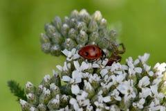 瓢虫和蜘蛛01 库存图片