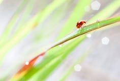 瓢虫和bokeh 免版税库存照片