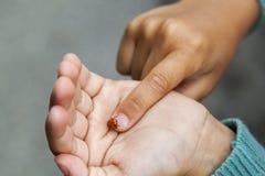 瓢虫在学习她与求知欲并且显示它给她的父母女孩的棕榈和手指爬行 库存图片