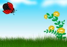 瓢虫在草背景中 图库摄影
